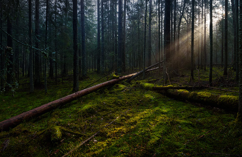 The Smolensk Forest, Russia