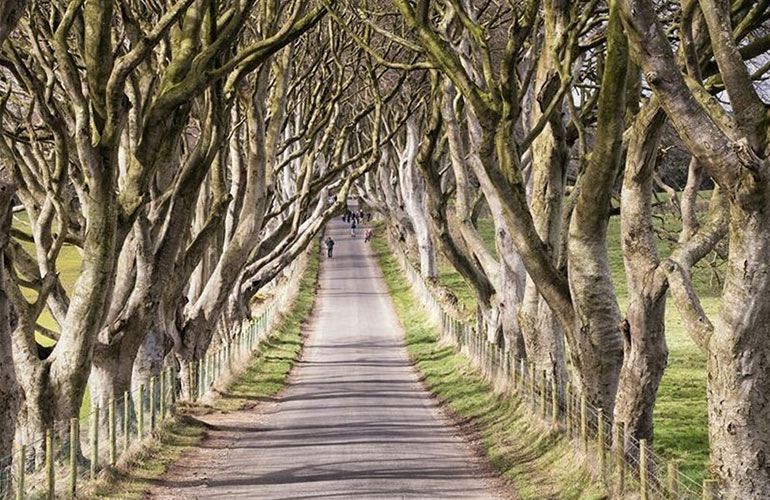 Tollymore Forest Park and The Dark Hedges