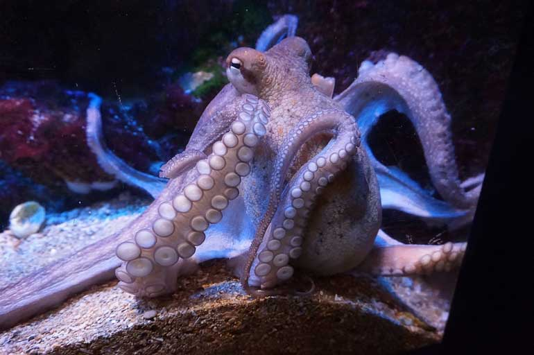 11. Why did the octopus walk out of the sea?