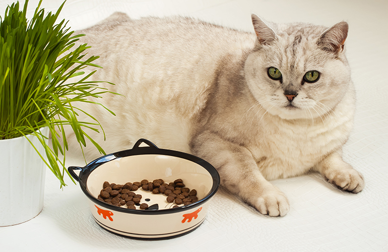 The reason your pet is fat is because you are too