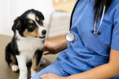 44 secrets your veterinarian won't tell you