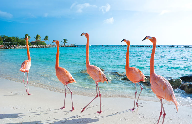 Flamingos bend their legs at the ankle, not the knee