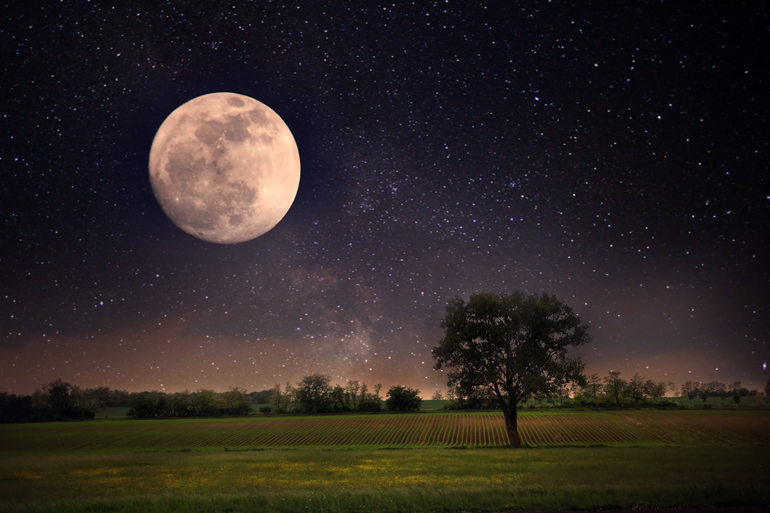 Full moon and lonely tree