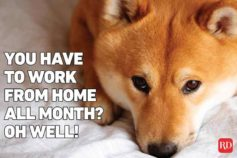 14 working from home memes that are hilariously accurate