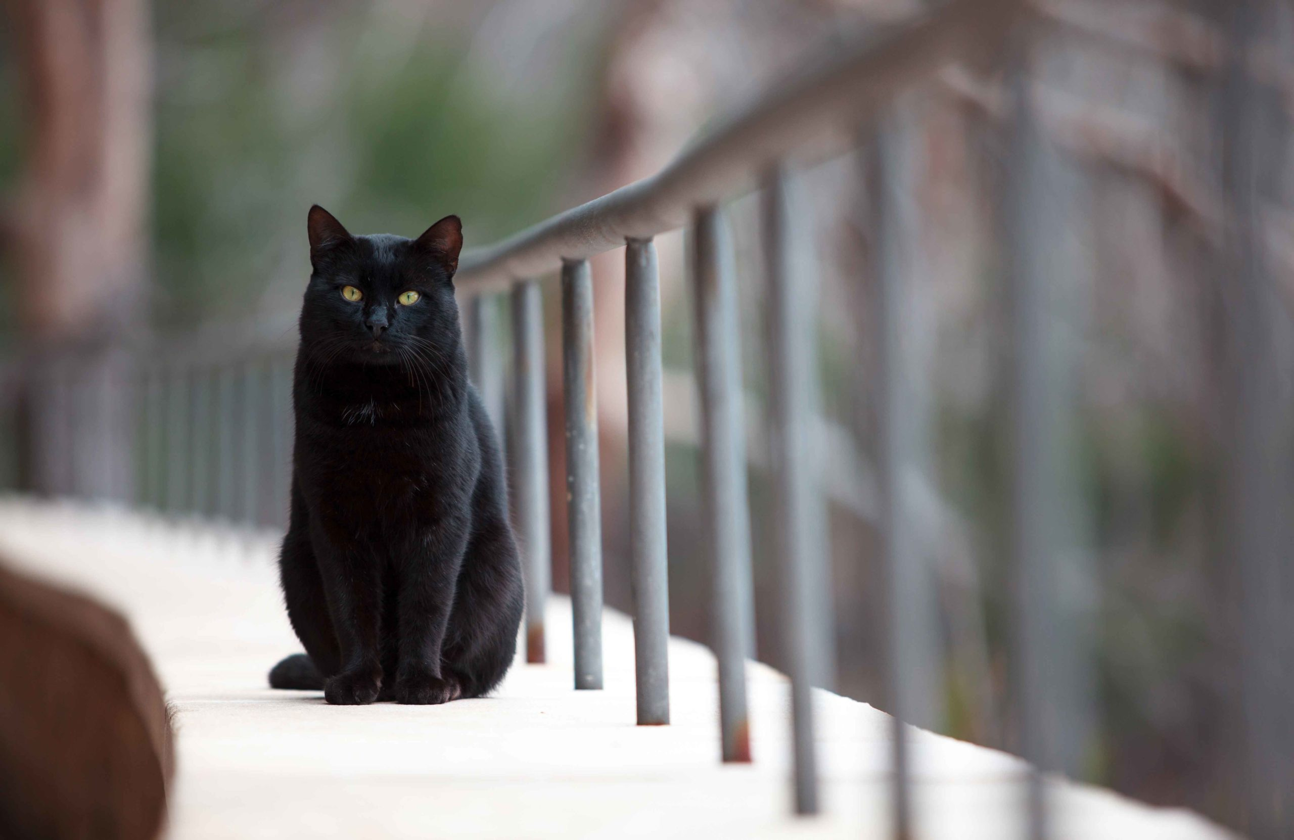 Black cats cause epidemics