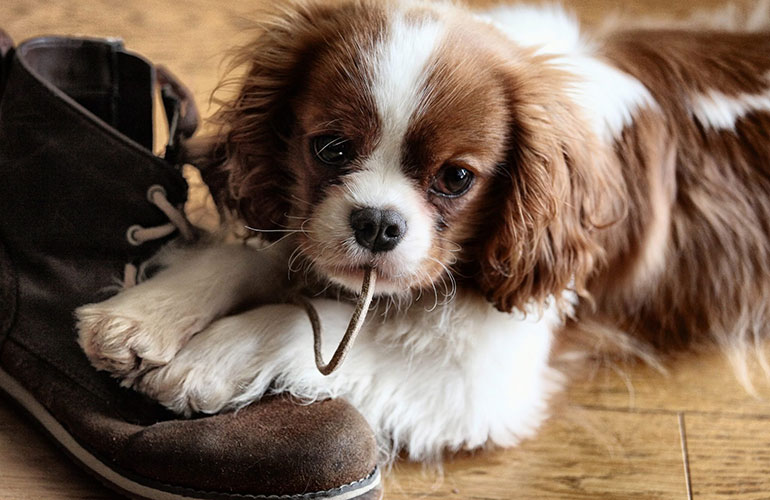 Chewing on your shoes is his favourite hobby