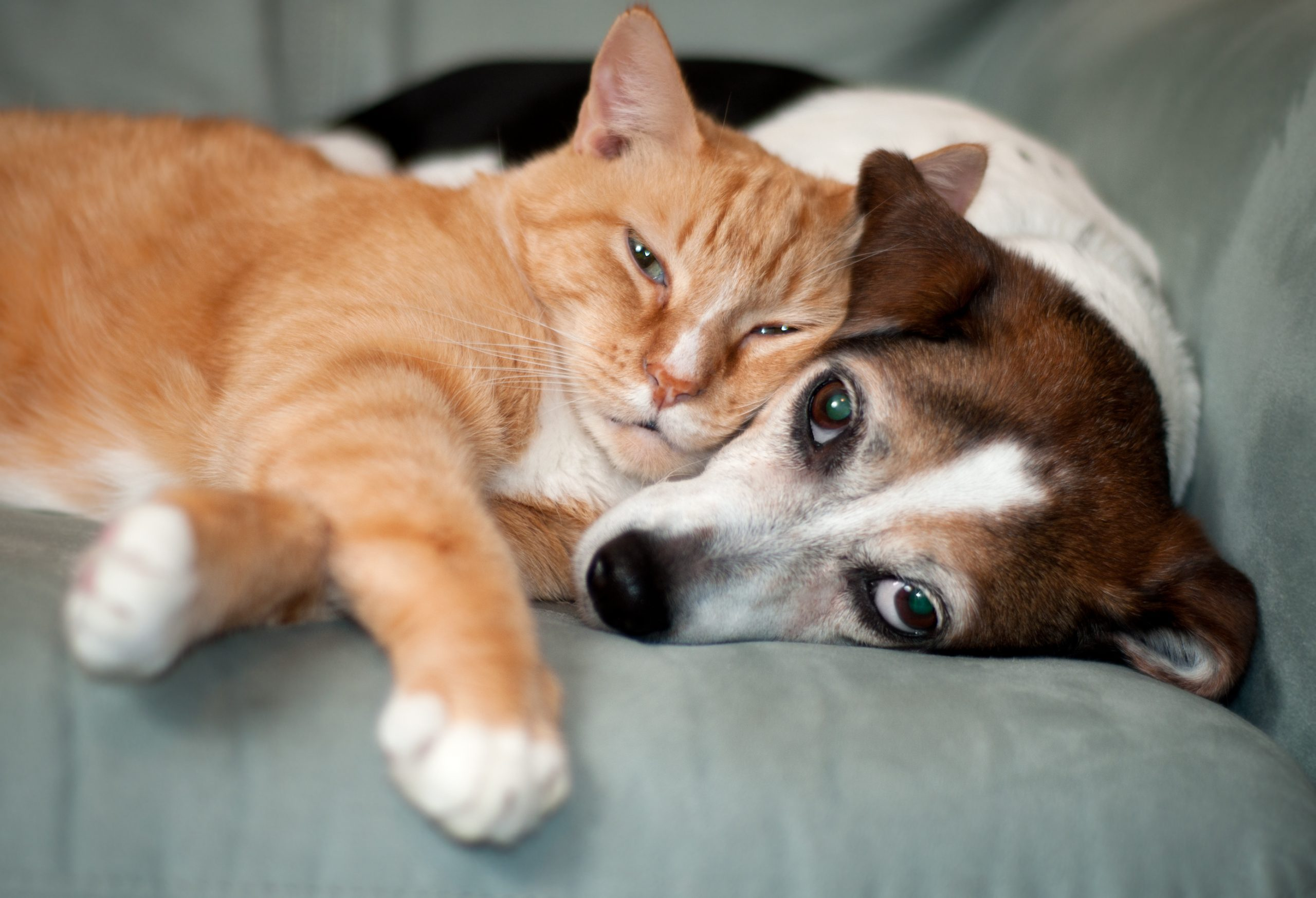 Puppy (and kitty) love