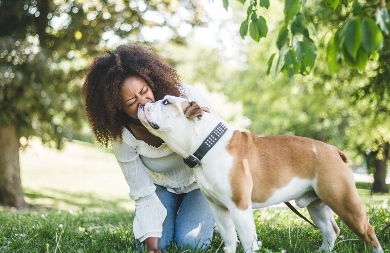 The calmest dog breeds you'll want to bring home
