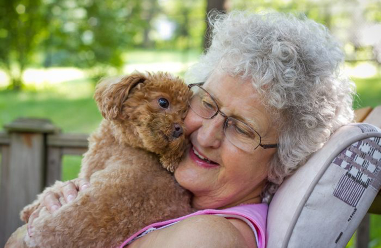 Do toy breeds live longer than other breeds?